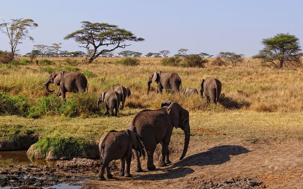 Image result for african savannah