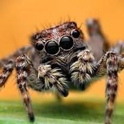 SpidersRCute